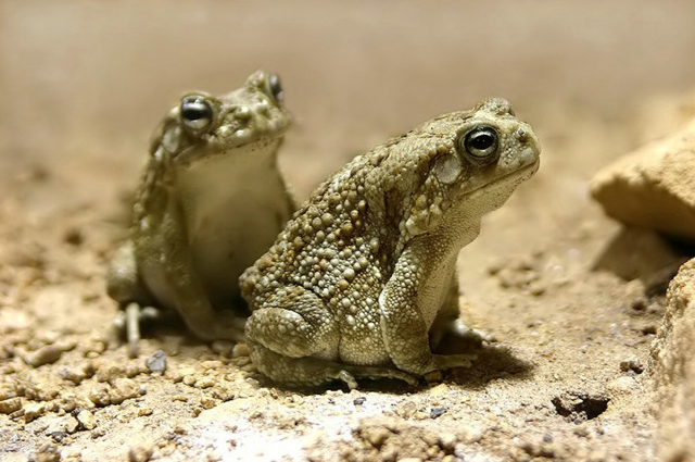 File:RealToads.png