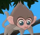 Bébé Babouin