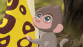 Baboons (238).png