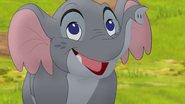 Follow-that-hippo (210)
