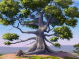 Iroko Tree