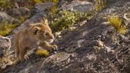 Lionking2019-animationscreencaps.com-1793