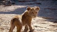 Lionking2019-animationscreencaps.com-4583