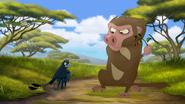 Baboonrefuses