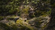 Lionking2019-animationscreencaps.com-9073