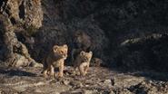 Lionking2019-animationscreencaps.com-3330