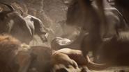 Lionking2019-animationscreencaps.com-4897