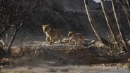 Lionking2019-animationscreencaps.com-2827
