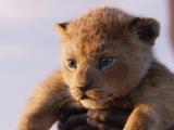 Simba and Nala's cub