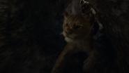 Lionking2019-animationscreencaps.com-3238