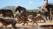 Lionking2019-animationscreencaps.com-2626