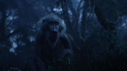 Lionking2019-animationscreencaps.com-10036