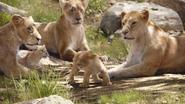 Lionking2019-animationscreencaps.com-2095