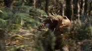 Lionking2019-animationscreencaps.com-9093