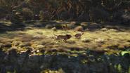 Lionking2019-animationscreencaps.com-9482