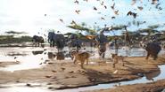 Lionking2019-animationscreencaps.com-2652