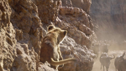 Lionking2019-animationscreencaps.com-4979