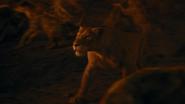 Lionking2019-animationscreencaps.com-11655