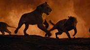 Lionking2019-animationscreencaps.com-11754