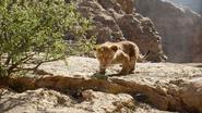 Lionking2019-animationscreencaps.com-4544