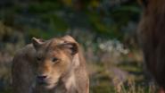 Lionking2019-animationscreencaps.com-9833