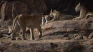Lionking2019-animationscreencaps.com-7127