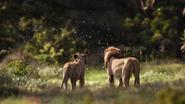 Lionking2019-animationscreencaps.com-9401