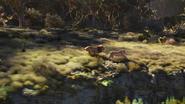 Lionking2019-animationscreencaps.com-9479