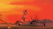Lion-king2-disneyscreencaps.com-2419