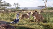 Lionking2019-animationscreencaps.com-2313
