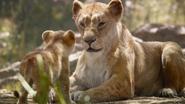 Lionking2019-animationscreencaps.com-2093