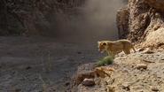 Lionking2019-animationscreencaps.com-5117