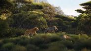 Lionking2019-animationscreencaps.com-6905
