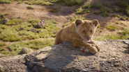 Lionking2019-animationscreencaps.com-1765