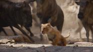 Lionking2019-animationscreencaps.com-4673