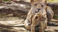Lionking2019-animationscreencaps.com-2061