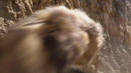 Lionking2019-animationscreencaps.com-4925