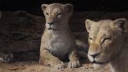 Lionking2019-animationscreencaps.com-7302