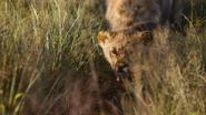 Lionking2019-animationscreencaps.com-1577