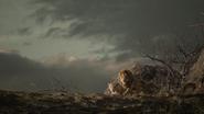 Lionking2019-animationscreencaps.com-10993