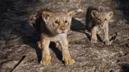 Lionking2019-animationscreencaps.com-3298