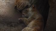 Lionking2019-animationscreencaps.com-5327
