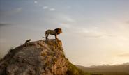 Mufasa & Simba Rock 2019