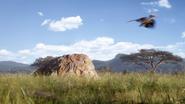 Lionking2019-animationscreencaps.com-2370