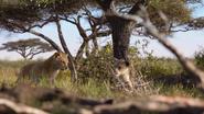 Lionking2019-animationscreencaps.com-2703