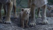 Lionking2019-animationscreencaps.com-5785