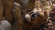 Lionking2019-animationscreencaps.com-9123