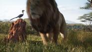 Lionking2019-animationscreencaps.com-1638