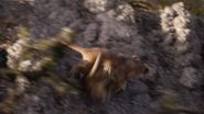 Lionking2019-animationscreencaps.com-2751
