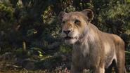 Lionking2019-animationscreencaps.com-9733